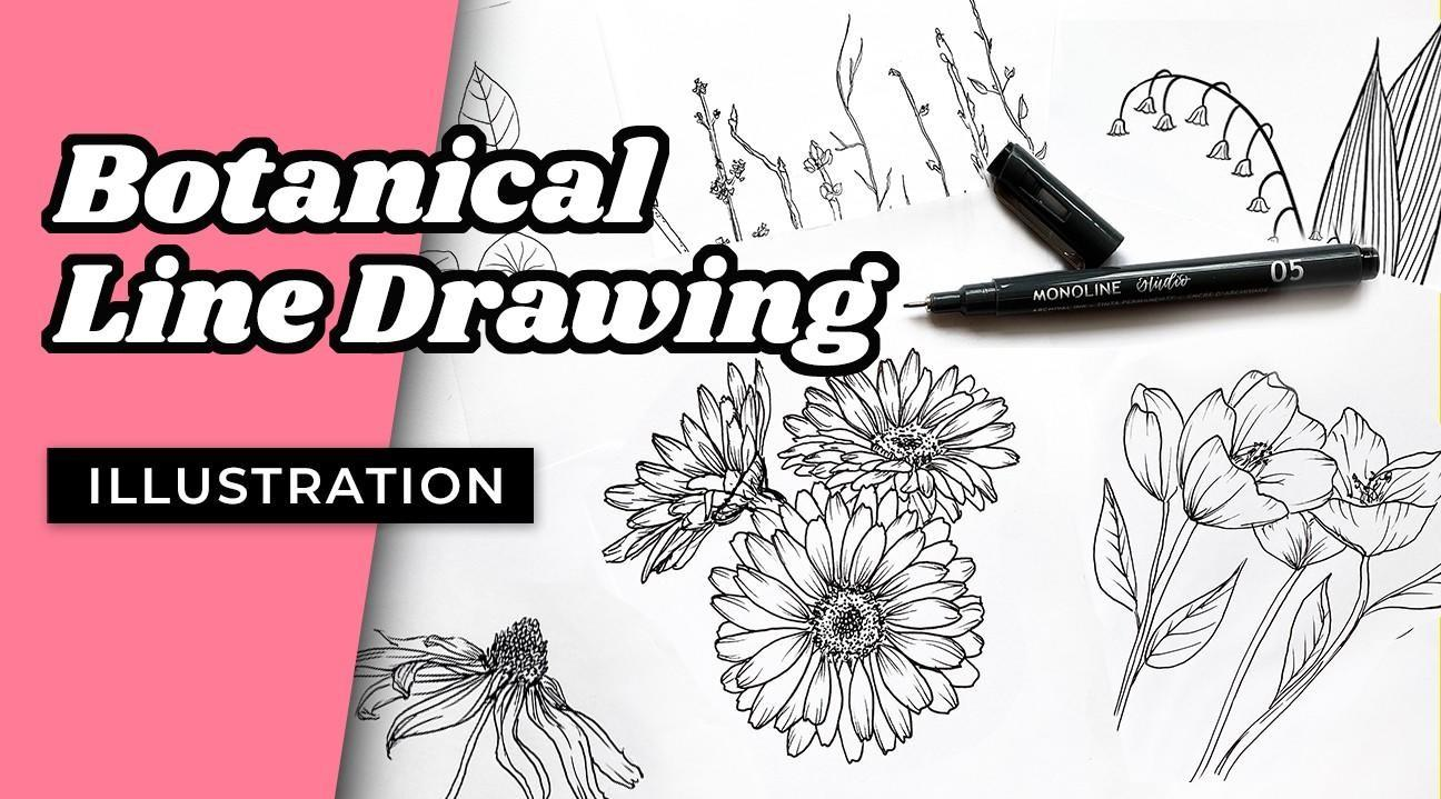 botanical line drawing