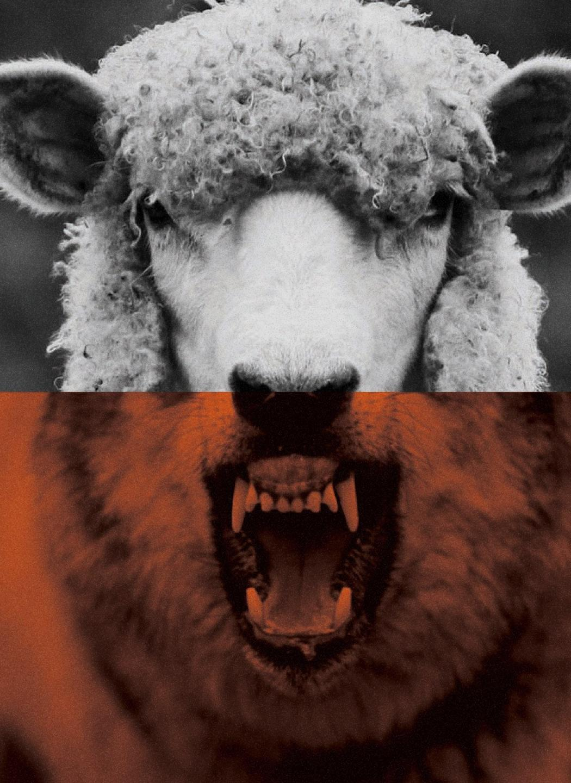 Half-sheep, half-wolf