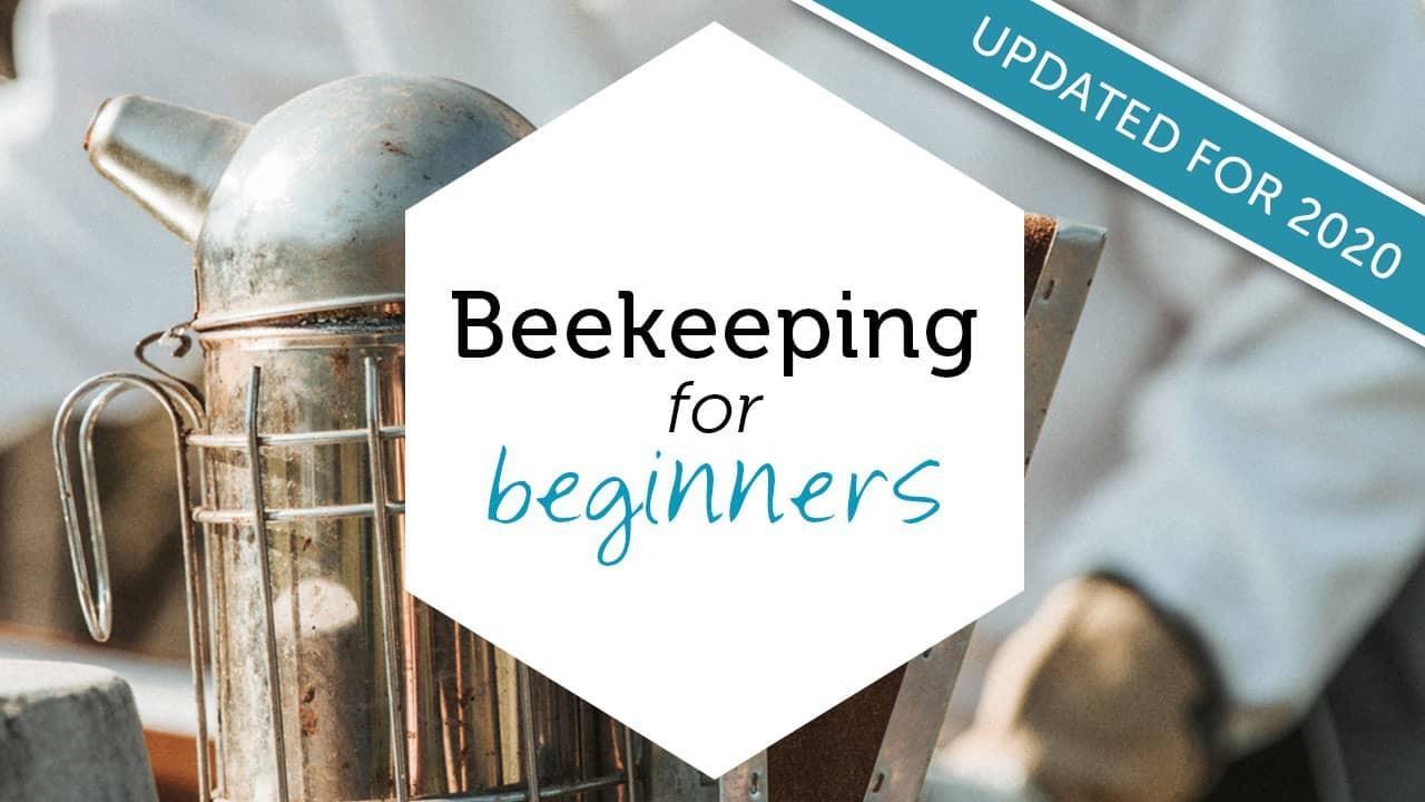 beekeeping for beginners online beekeeping course image