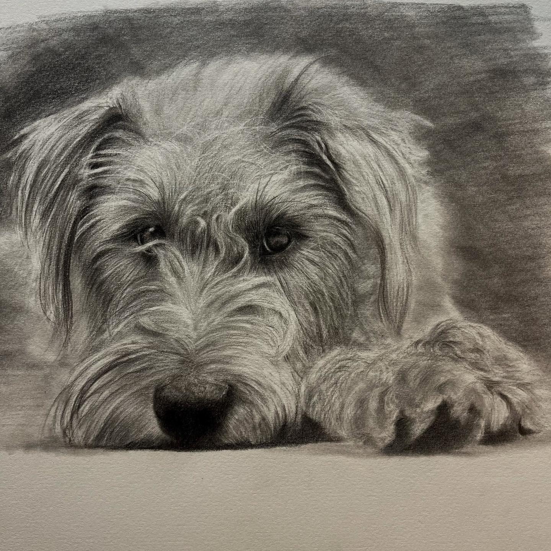 Tonal Dog - Tier One - Patreon - Bonny Snowdon Fine Art