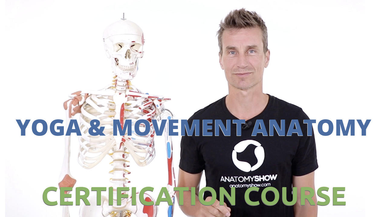 Anatomy Show Certificate Course