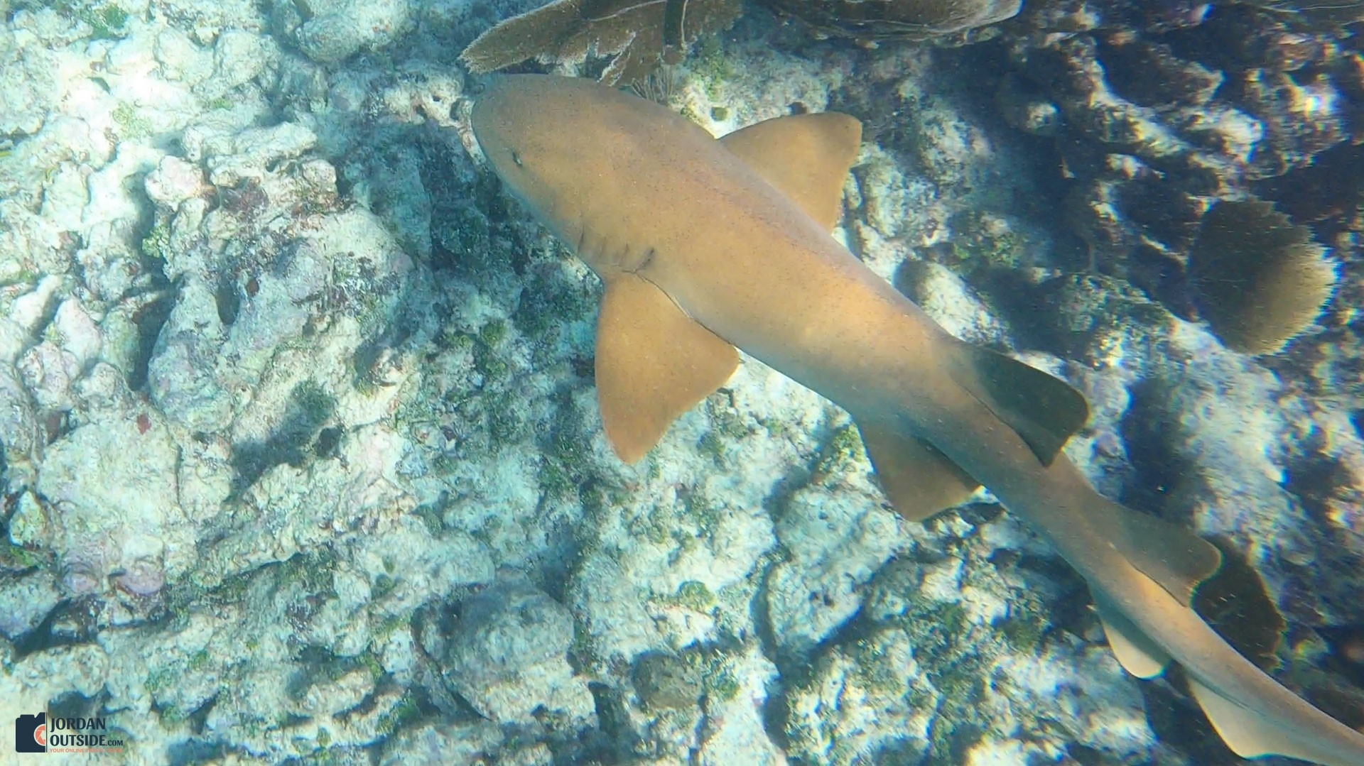 Reef Shark at the Grecian Rocks Coral Reef