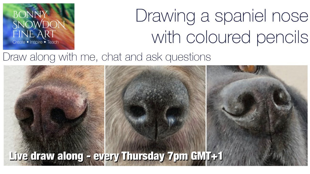 Spaniel Nose on Pastelat - Live Draw Along and Chat - YouTube Library - Bonny Snowdon Fine Art - YouTube Library - Bonny Snowdon Fine Art