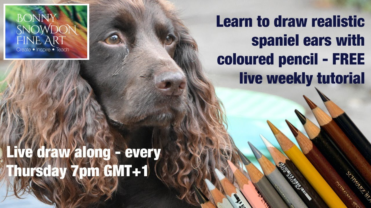 Spaniel Ears in Coloured Pencil - Part One - Weekly Live Drawing Workshop - YouTube Library - Bonny Snowdon Fine Art