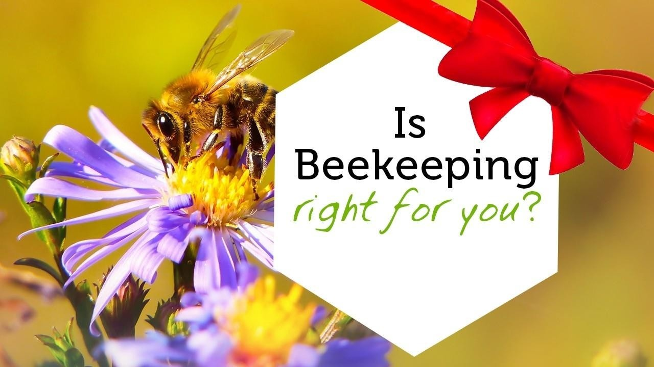 Intro to beekeeping online class image