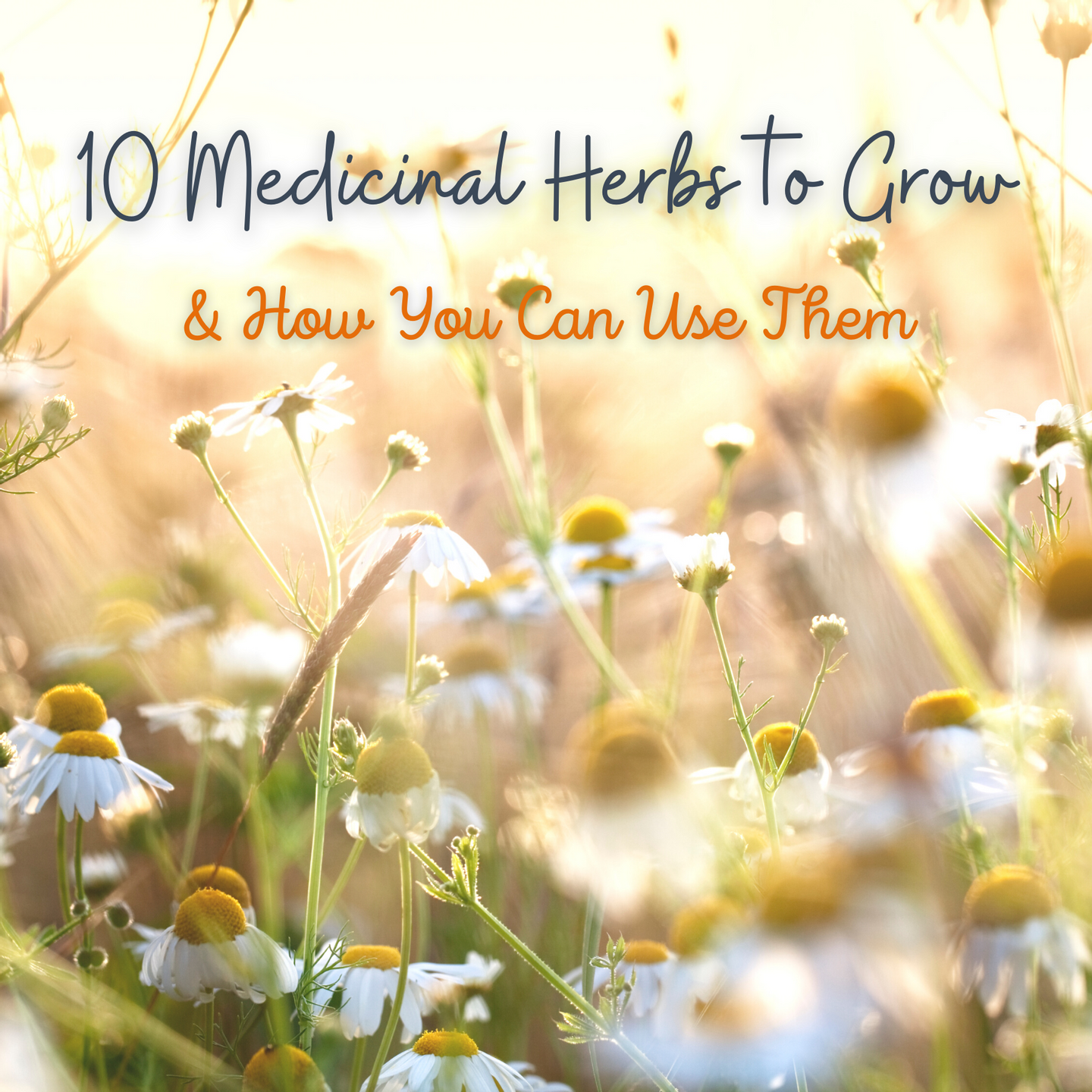 10 Medicinal Herbs to Grow & How You Can Use Them