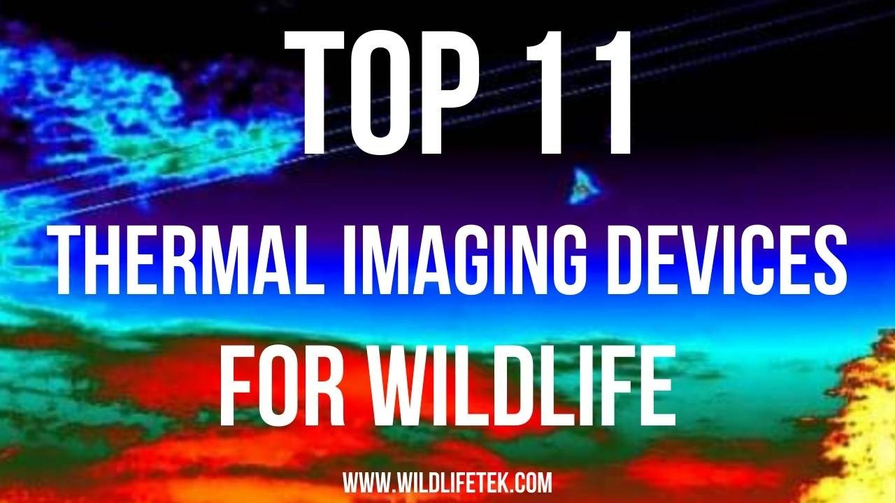 Thermal Imaging for Wildlife