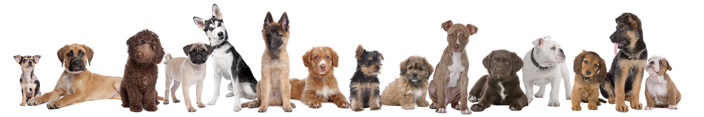 which puppy breed