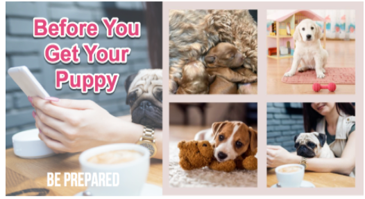 before you get your puppy online course