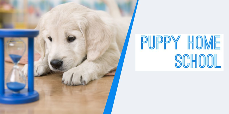 puppy home school online course