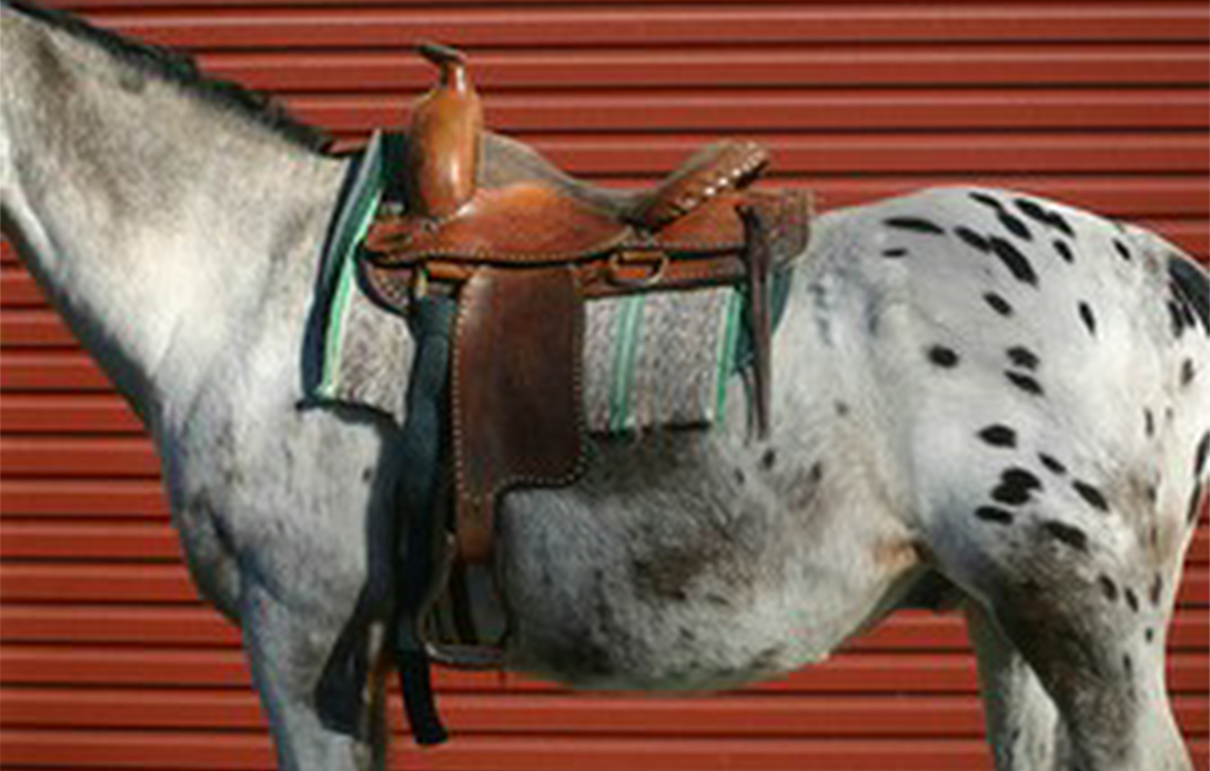HRM article 6 Your saddle